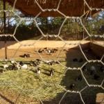 Abfahrt in Sabha: Räuber Grapsch-Meerschweinchen grüßen