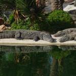 Kinderausflug zr Krokodilfarm im Djerba-Expo-Gelände
