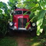 alles Banane: Zufahrt zum Edelweiß Camp