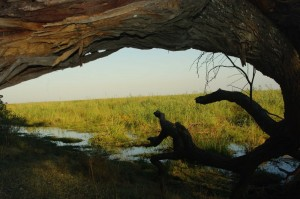 Ausblick in die Linyanti-Suempfe