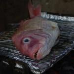 lecker Fisch