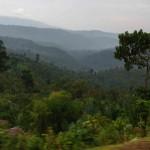 05.02.2010 tropischer Wald im äthiopiscchen Hochland